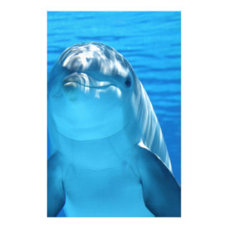 Dolphin Personalized Stationery