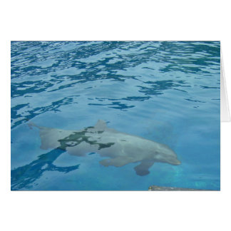 DOLPHIN SWIMMING CARD
