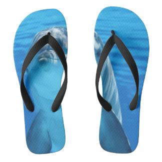 Dolphin Thongs