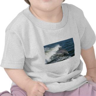 Dolphin Tshirts