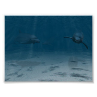 Dolphins at Play Poster