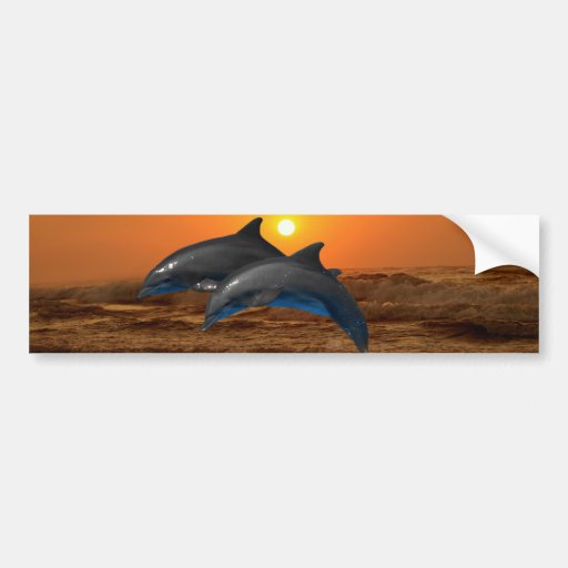 Dolphins at sunset bumper stickers