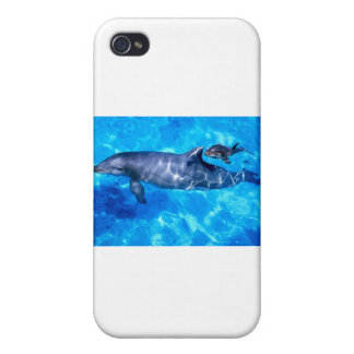 dolphins iPhone 4/4S cases