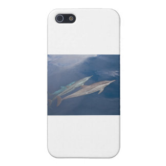 Dolphins Cover For iPhone 5