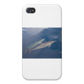 Dolphins iPhone 4/4S Case