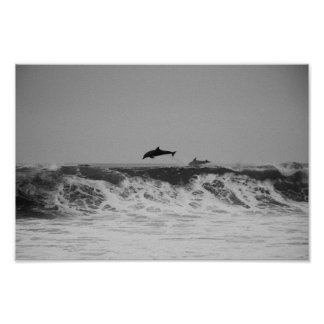 Dolphins jumping through waves in black & white poster