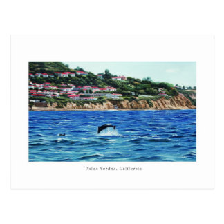 Dolphins Near Palos Verdes Postcard