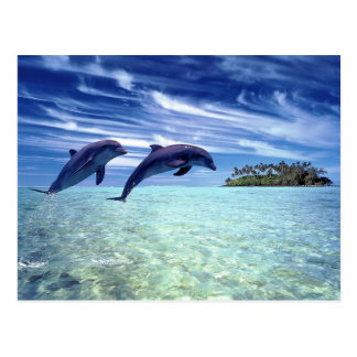 Dolphin's paradise postcard
