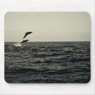 Dolphins Photo Mousepad