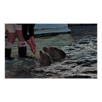 Dolphins Photo Poster