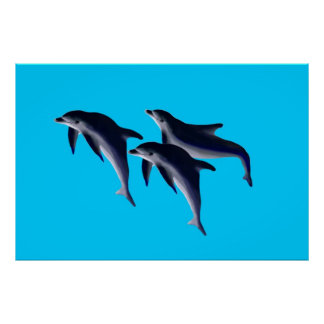 Dolphins Posters