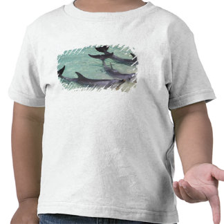 Dolphins, Sea World, Gold Coast, Queensland, T Shirt