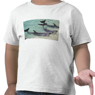 Dolphins, Sea World, Gold Coast, Queensland, T-shirts