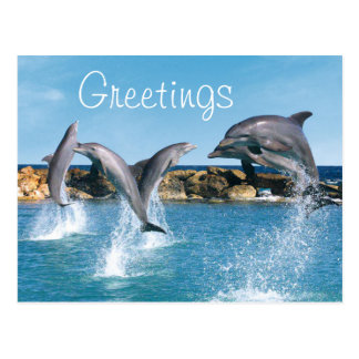 Dolphins swimming and doing tricks postcard