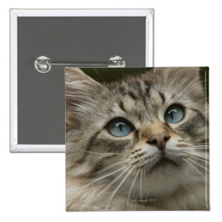 Domestic cat 15 cm square badge