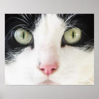 Domestic cat portrait poster