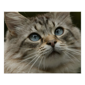 Domestic cat print
