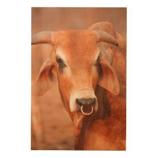 Domestic Dairy Cow, Zimbabwe Wood Canvases