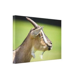 Domestic Goat Portrait On A Green Background Canvas Prints
