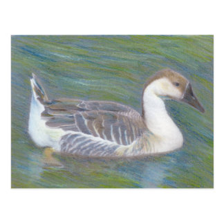 Domestic Goose Fine Art Animal Postcard