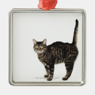 Domestic male tabby cat standing metal ornament