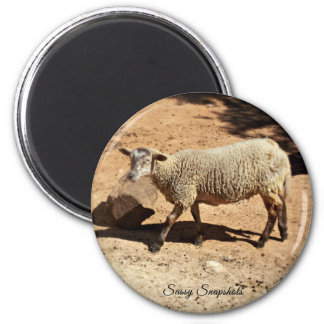 Domestic Sheep 6 Cm Round Magnet