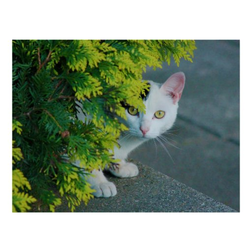 Domestic Short-Haired Cat Peaking Print