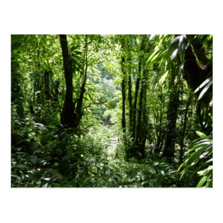 Dominican Rain Forest II Tropical Green Postcard