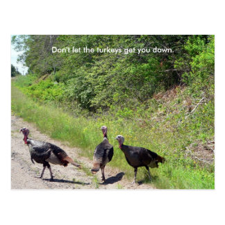Don t Let the Turkeys Get You Down Postcard