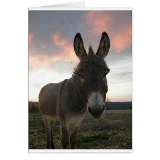 Donkey Art Cards