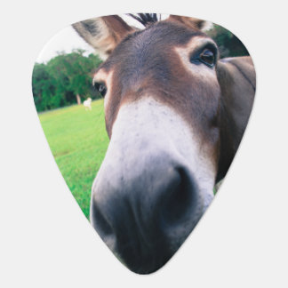 Donkey Guitar Pick