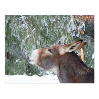 Donkey Holiday Postcard