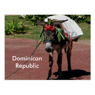 donkey in Dominican Republic on a postcard
