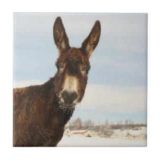 Donkey on a Winters Day Tile