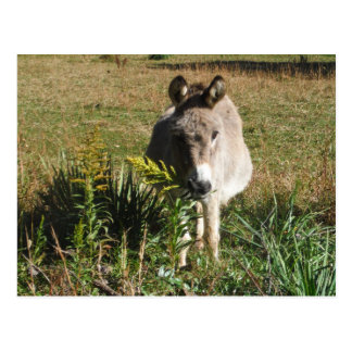 Donkey Picking Yellow Autumn Wildflowers Postcard