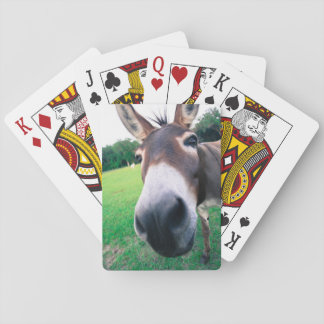 Donkey Playing Cards