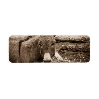 Donkey Return Address Label