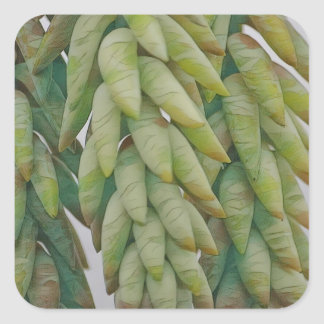 Donkey Tail Succulent Square Sticker