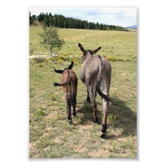 "Donkey ""Tales"" Photograph"