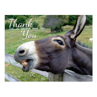 "Donkey ""Thank You"" Whimsy Greeting Postcard"