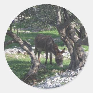 Donkey under olive trees Split Croatia nature pure Classic Round Sticker