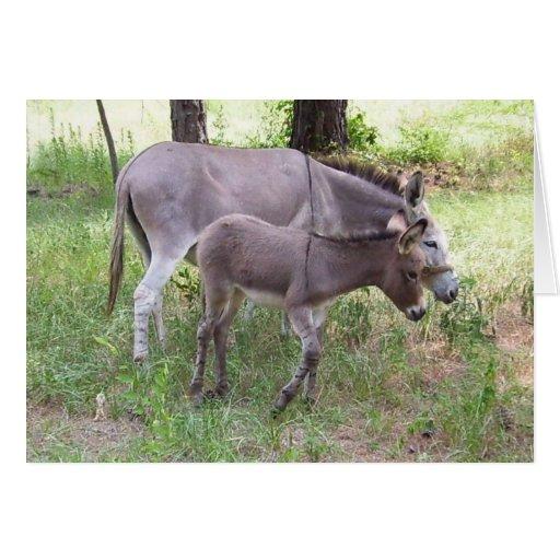 Donkey Zonkey Card