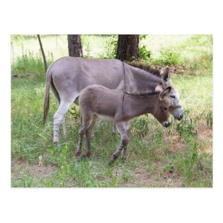 Donkey Zonkey Postcard