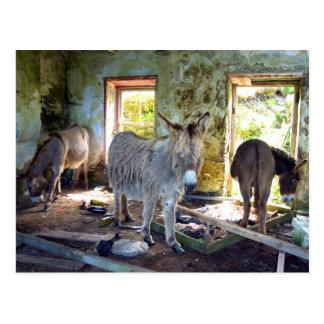 Donkeys of Blasket Postcard