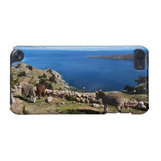 Donkeys' paradise iPod touch 5G case