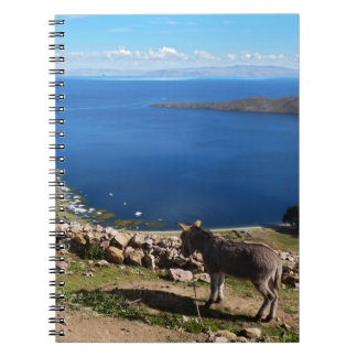Donkeys' paradise spiral notebook