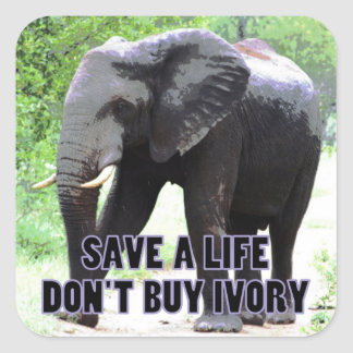 Don't Buy Ivory, Save an Elephant's Life Sticker
