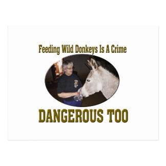 Don't Feed The Wild Donkey Postcard