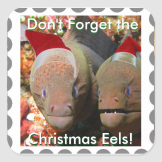 Don't Forget the Christmas Eels! with text. Square Sticker
