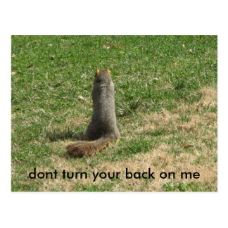 dont turn your back on me squirrel postcard